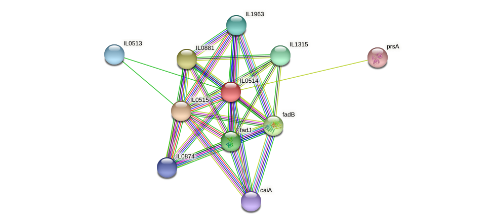 IL0514 protein (Idiomarina loihiensis) - STRING interaction network