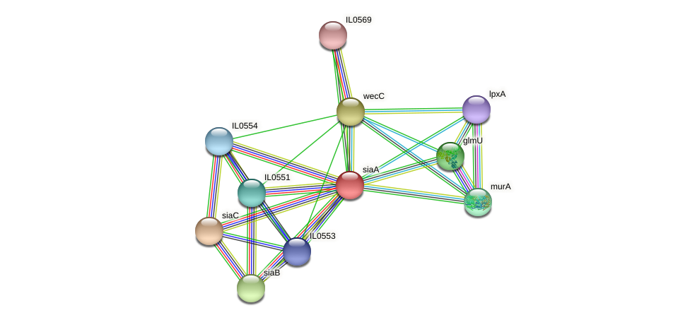 siaA protein (Idiomarina loihiensis) - STRING interaction network
