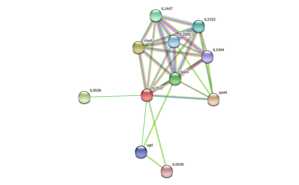 IL0537 protein (Idiomarina loihiensis) - STRING interaction network