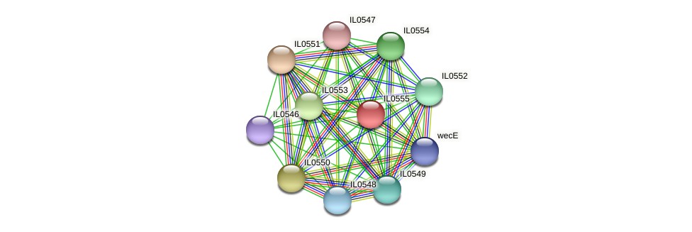 IL0555 protein (Idiomarina loihiensis) - STRING interaction network