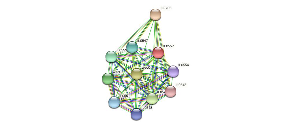 IL0557 protein (Idiomarina loihiensis) - STRING interaction network