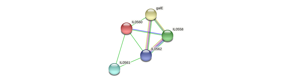IL0560 protein (Idiomarina loihiensis) - STRING interaction network