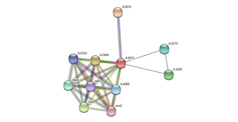 IL0571 protein (Idiomarina loihiensis) - STRING interaction network