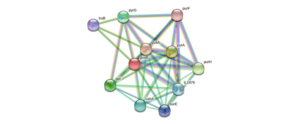 guaB protein (Idiomarina loihiensis) - STRING interaction network