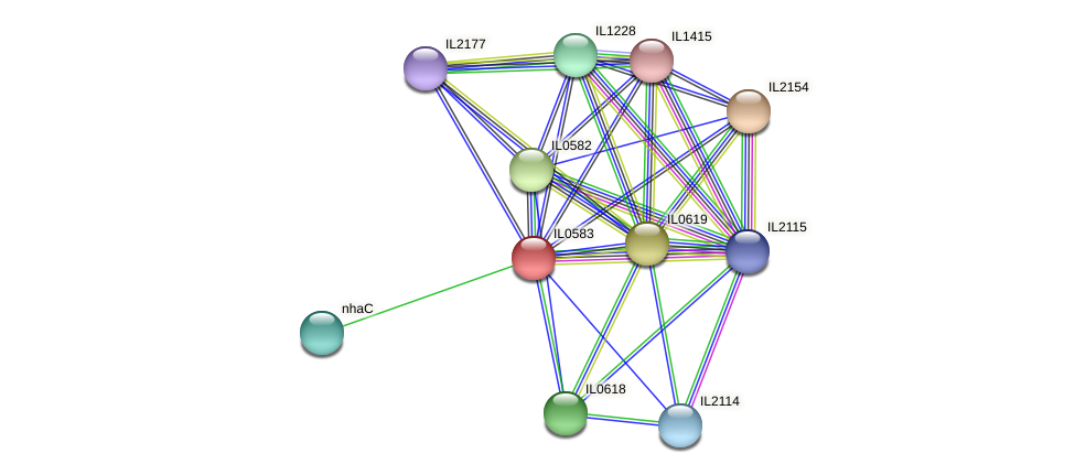 IL0583 protein (Idiomarina loihiensis) - STRING interaction network