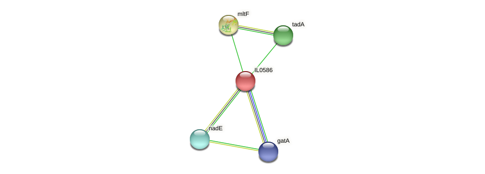 IL0586 protein (Idiomarina loihiensis) - STRING interaction network