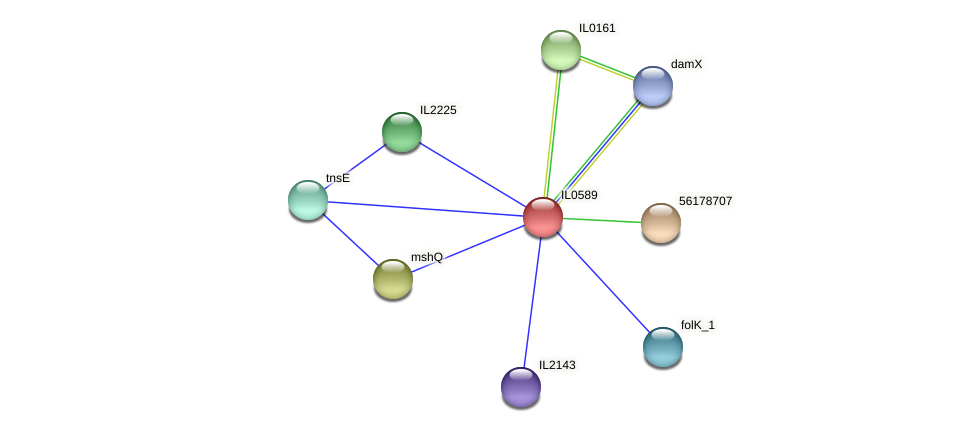 IL0589 protein (Idiomarina loihiensis) - STRING interaction network
