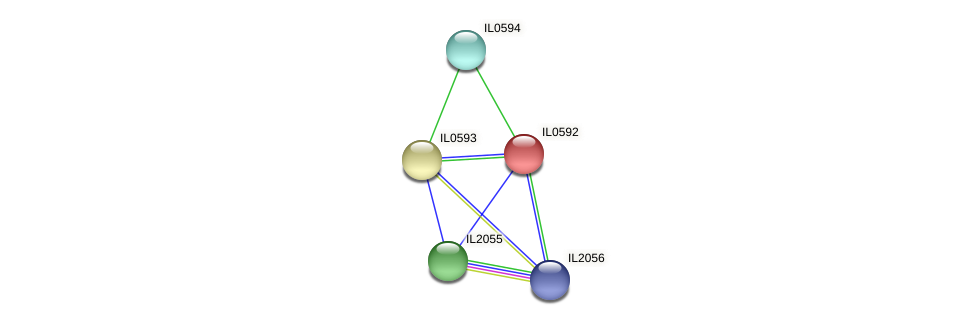 IL0592 protein (Idiomarina loihiensis) - STRING interaction network