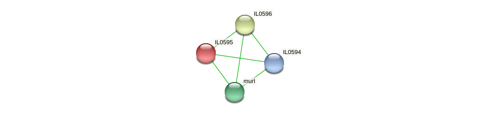IL0595 protein (Idiomarina loihiensis) - STRING interaction network
