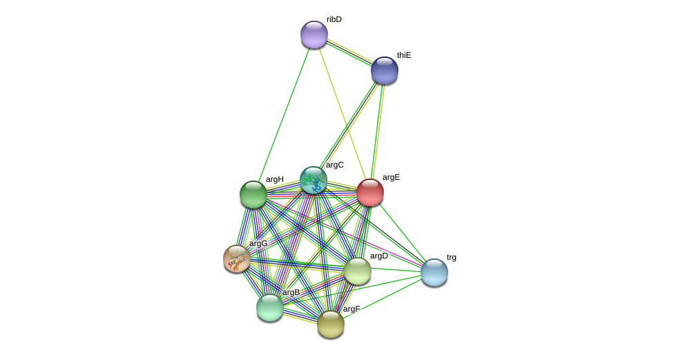 argE protein (Idiomarina loihiensis) - STRING interaction network