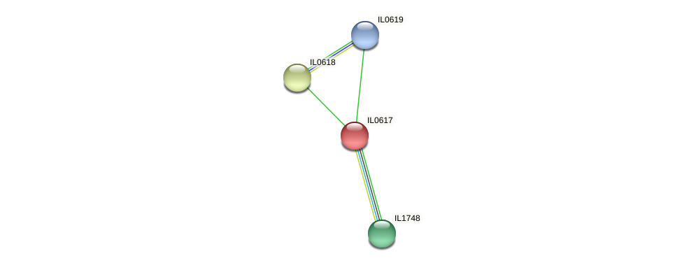IL0617 protein (Idiomarina loihiensis) - STRING interaction network