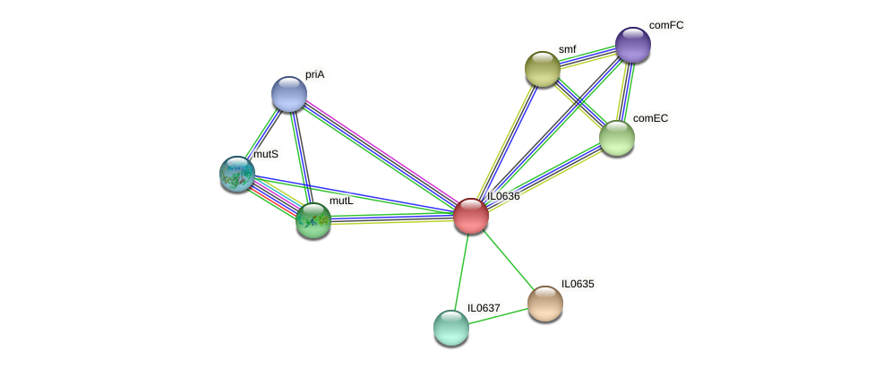 IL0636 protein (Idiomarina loihiensis) - STRING interaction network