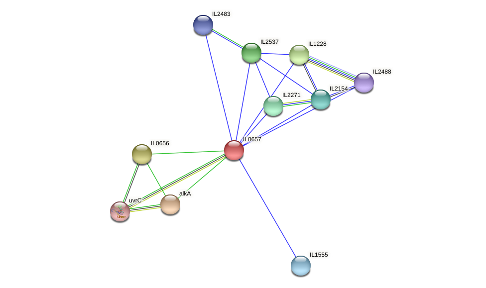 IL0657 protein (Idiomarina loihiensis) - STRING interaction network