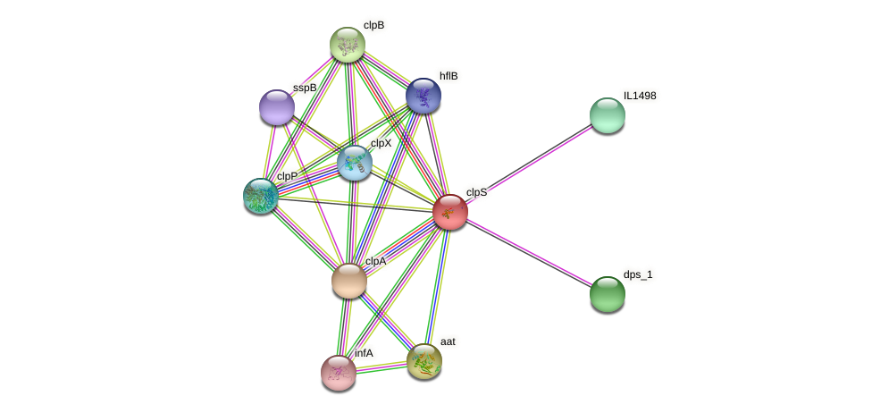 clpS protein (Idiomarina loihiensis) - STRING interaction network