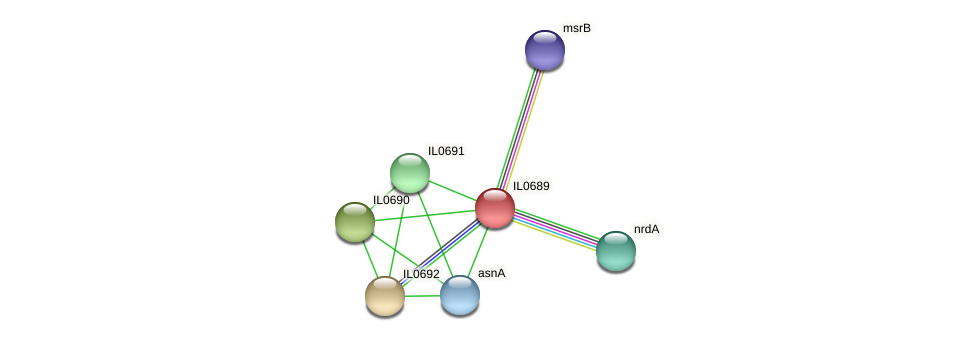 IL0689 protein (Idiomarina loihiensis) - STRING interaction network
