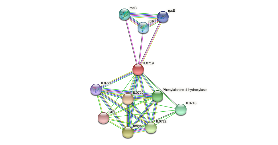 IL0719 protein (Idiomarina loihiensis) - STRING interaction network