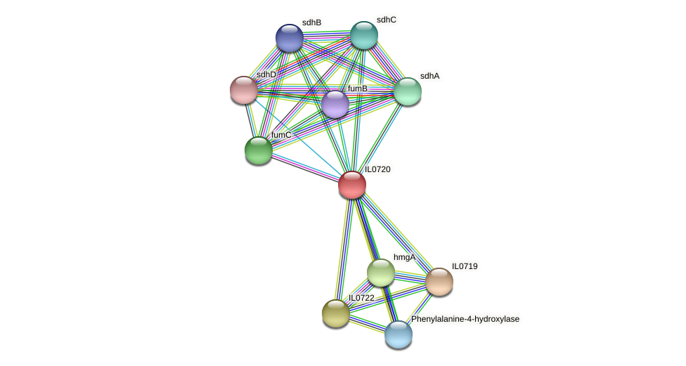 IL0720 protein (Idiomarina loihiensis) - STRING interaction network