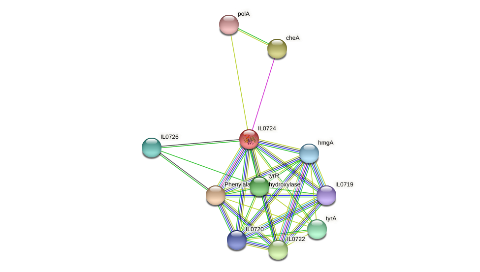 IL0724 protein (Idiomarina loihiensis) - STRING interaction network