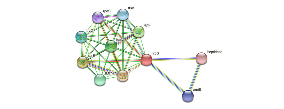 nlpD protein (Idiomarina loihiensis) - STRING interaction network