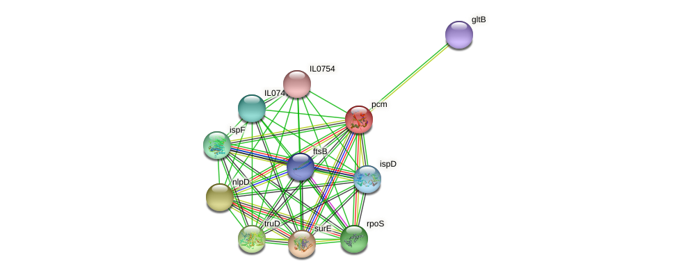 pcm protein (Idiomarina loihiensis) - STRING interaction network