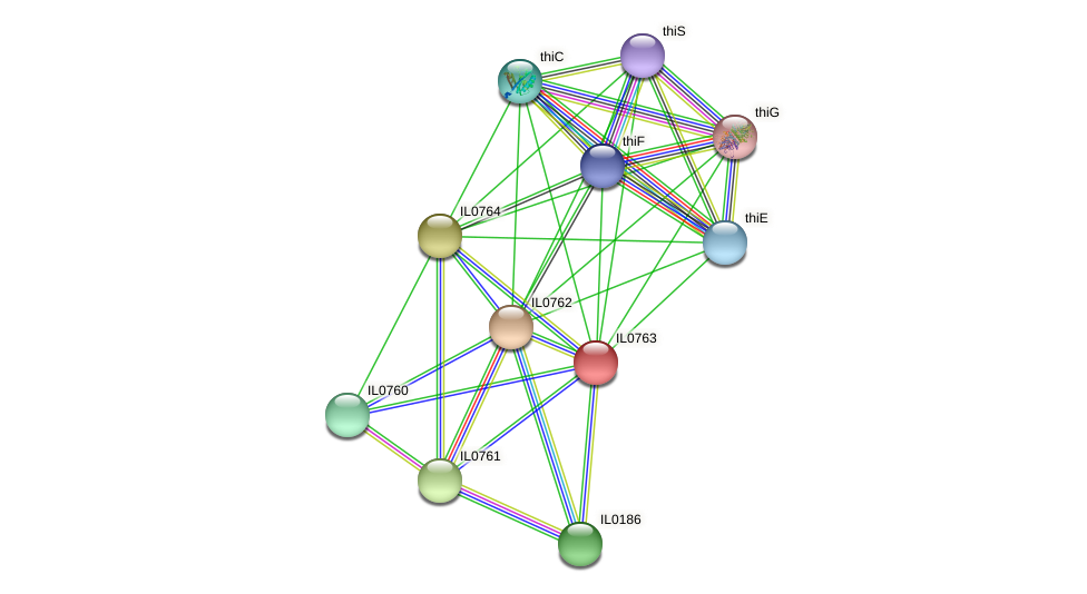 IL0763 protein (Idiomarina loihiensis) - STRING interaction network