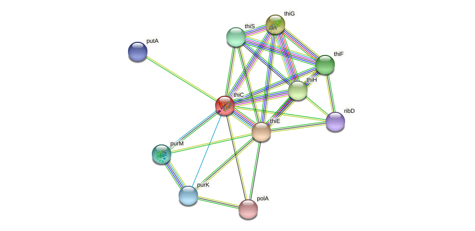 thiC protein (Idiomarina loihiensis) - STRING interaction network
