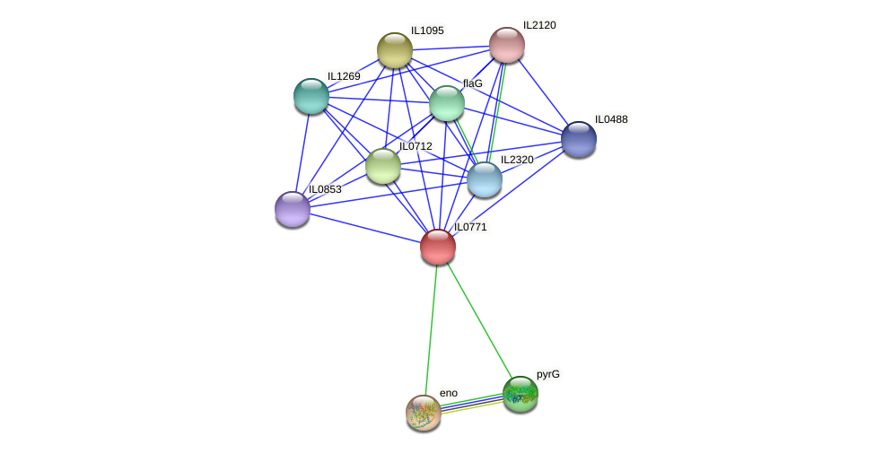 IL0771 protein (Idiomarina loihiensis) - STRING interaction network