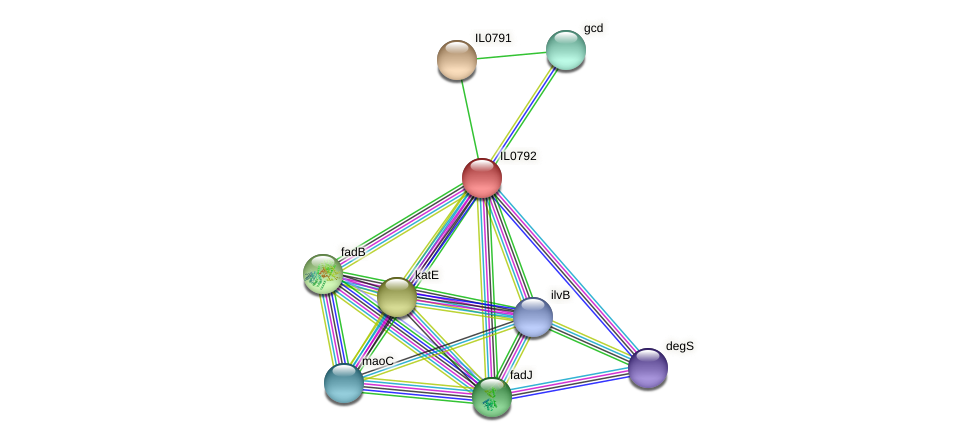 IL0792 protein (Idiomarina loihiensis) - STRING interaction network