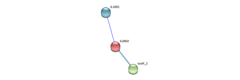 IL0802 protein (Idiomarina loihiensis) - STRING interaction network