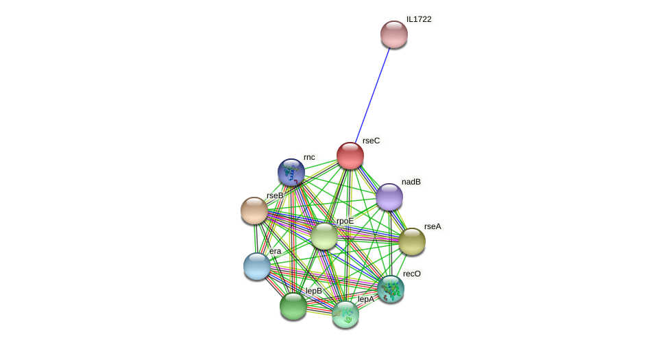 rseC protein (Idiomarina loihiensis) - STRING interaction network