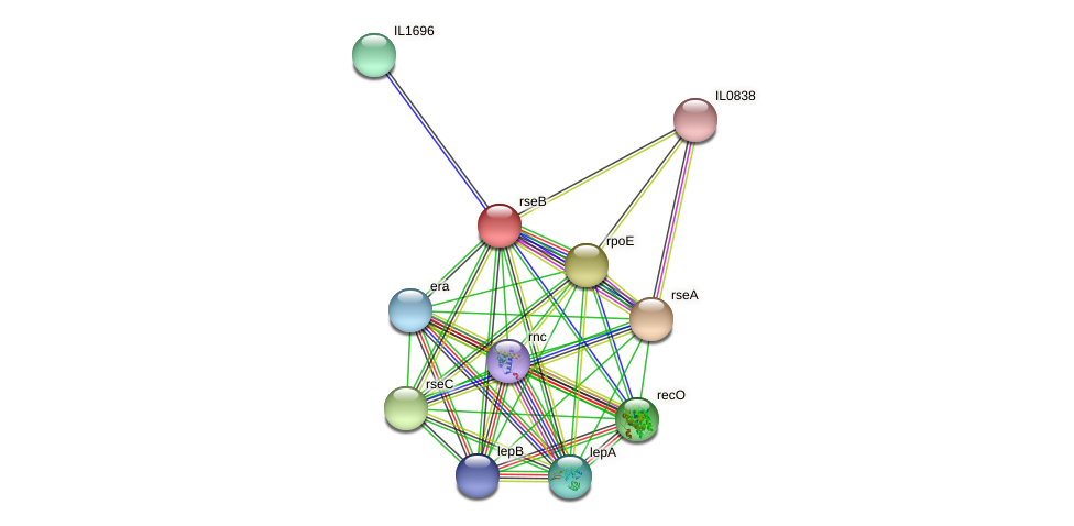 rseB protein (Idiomarina loihiensis) - STRING interaction network
