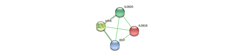 IL0818 protein (Idiomarina loihiensis) - STRING interaction network