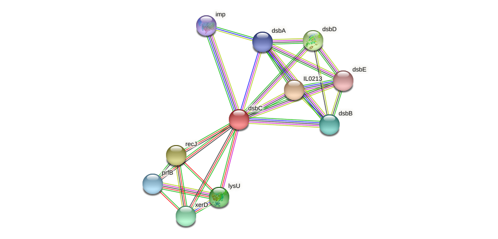 dsbC protein (Idiomarina loihiensis) - STRING interaction network