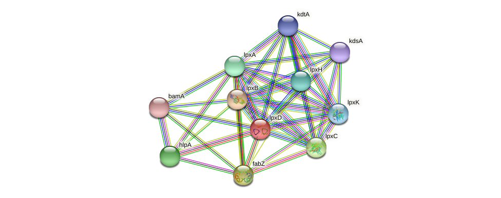 lpxD protein (Idiomarina loihiensis) - STRING interaction network