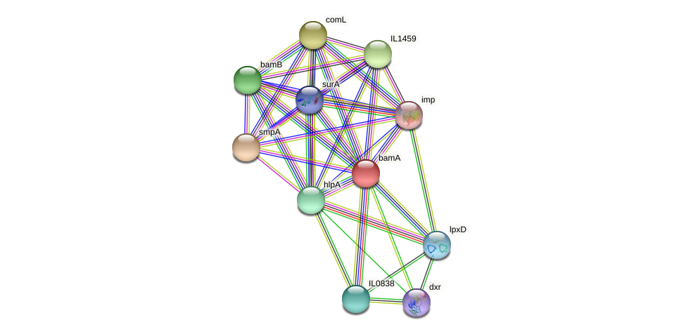 bamA protein (Idiomarina loihiensis) - STRING interaction network