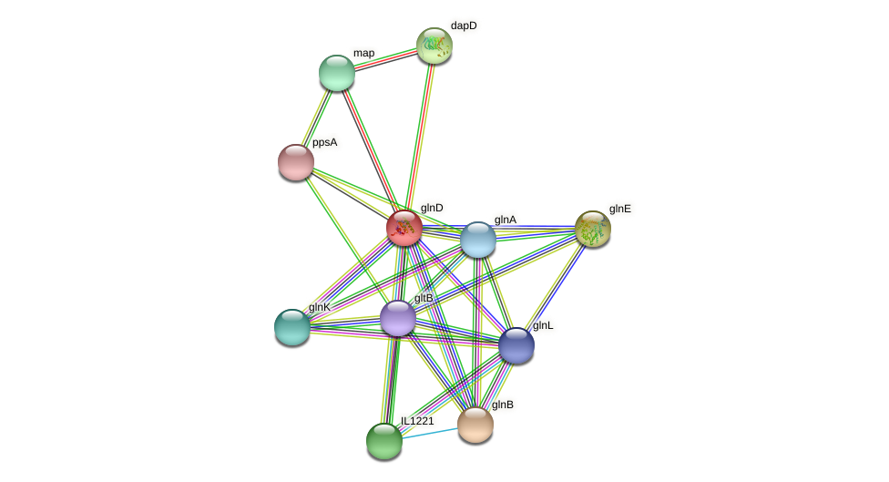 glnD protein (Idiomarina loihiensis) - STRING interaction network