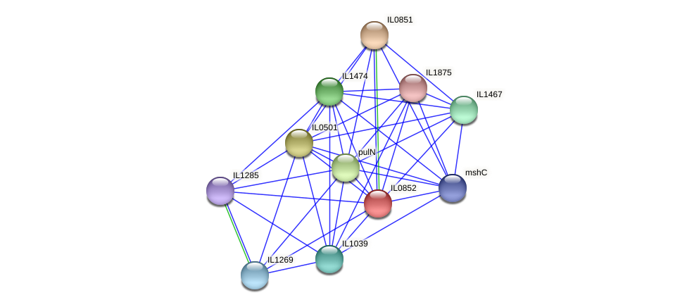 IL0852 protein (Idiomarina loihiensis) - STRING interaction network