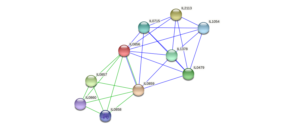 IL0856 protein (Idiomarina loihiensis) - STRING interaction network