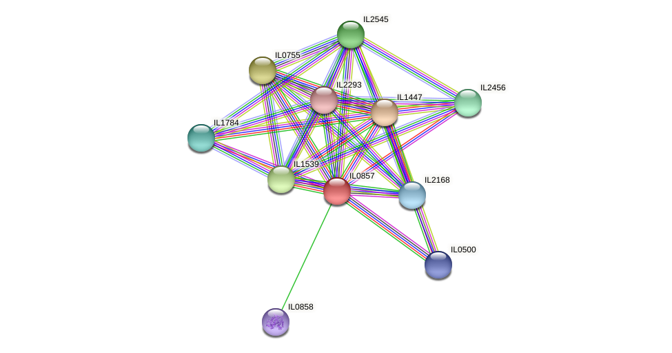 IL0857 protein (Idiomarina loihiensis) - STRING interaction network