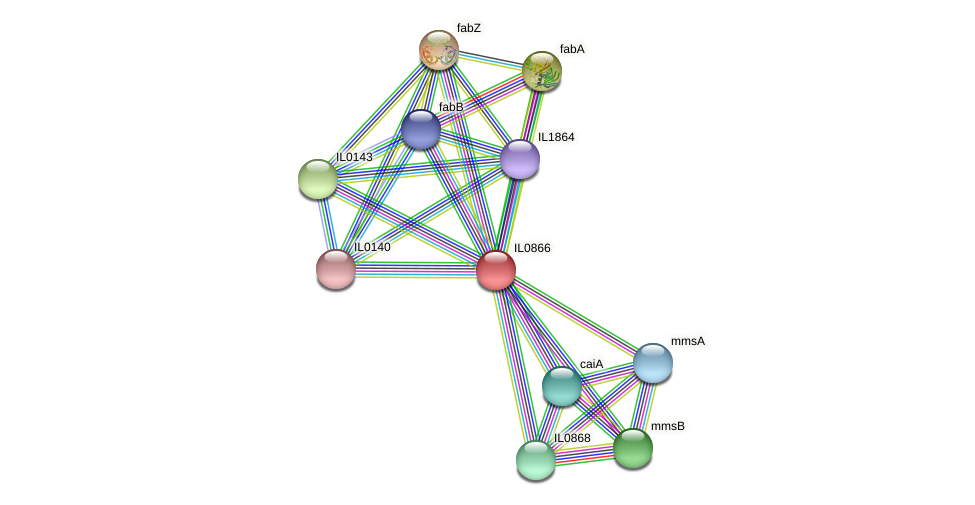 IL0866 protein (Idiomarina loihiensis) - STRING interaction network
