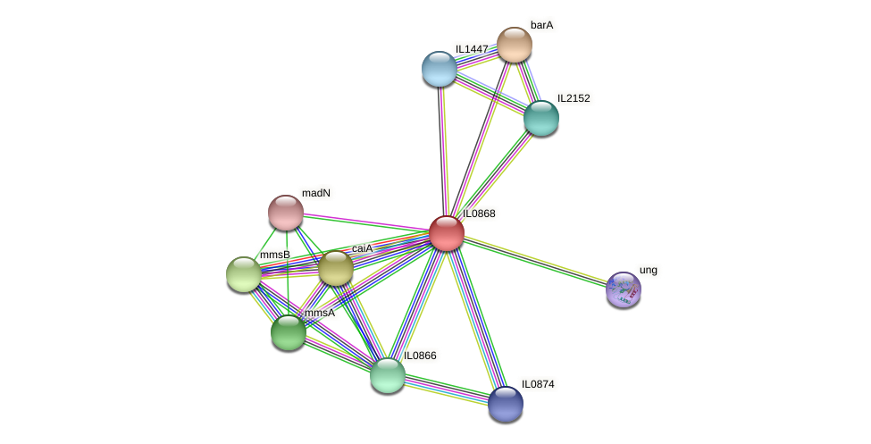 IL0868 protein (Idiomarina loihiensis) - STRING interaction network