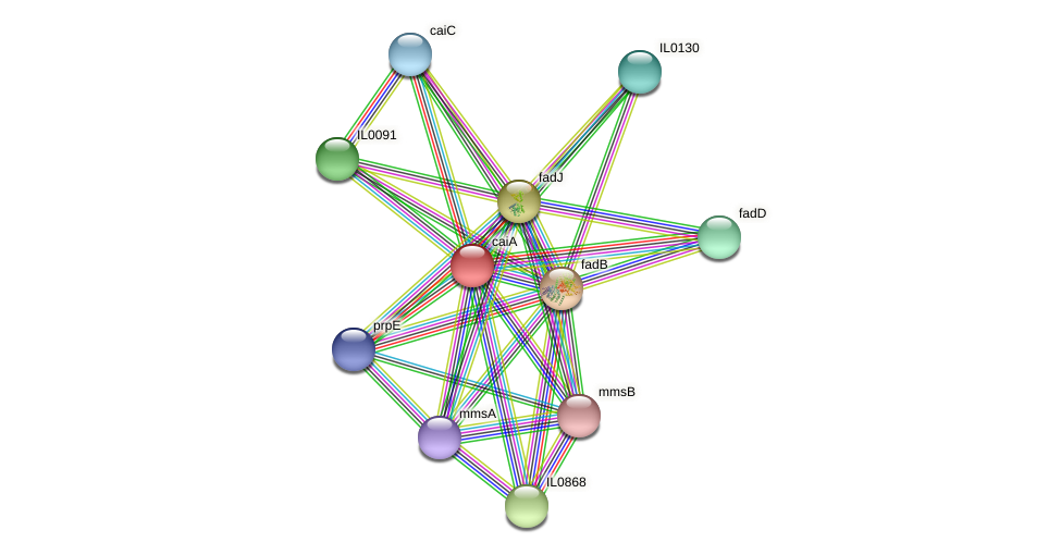 caiA protein (Idiomarina loihiensis) - STRING interaction network