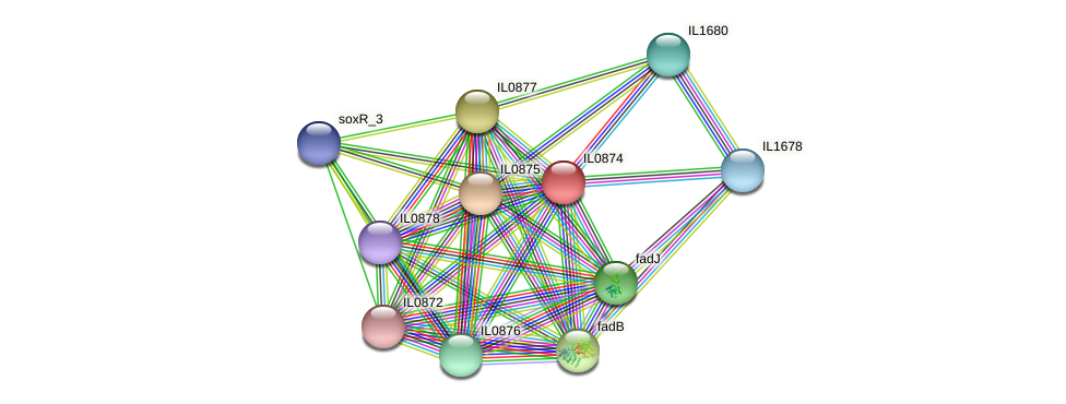 IL0874 protein (Idiomarina loihiensis) - STRING interaction network