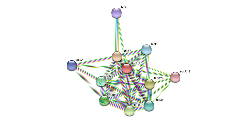 IL0875 protein (Idiomarina loihiensis) - STRING interaction network