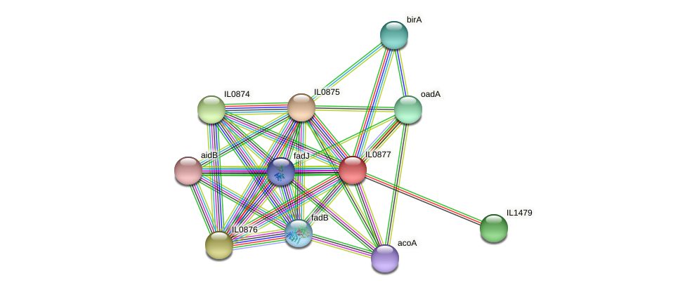 IL0877 protein (Idiomarina loihiensis) - STRING interaction network