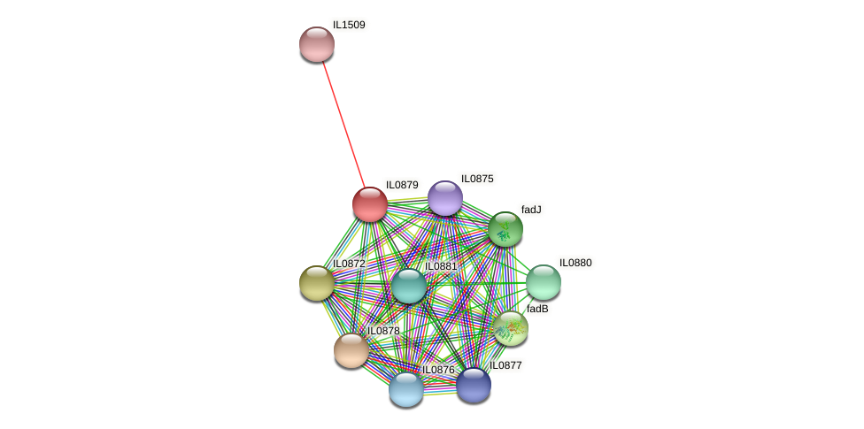 IL0879 protein (Idiomarina loihiensis) - STRING interaction network