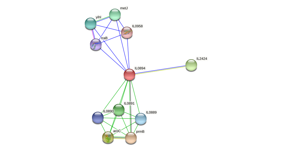 IL0894 protein (Idiomarina loihiensis) - STRING interaction network