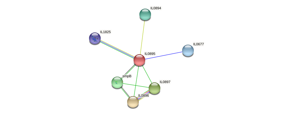 IL0895 protein (Idiomarina loihiensis) - STRING interaction network