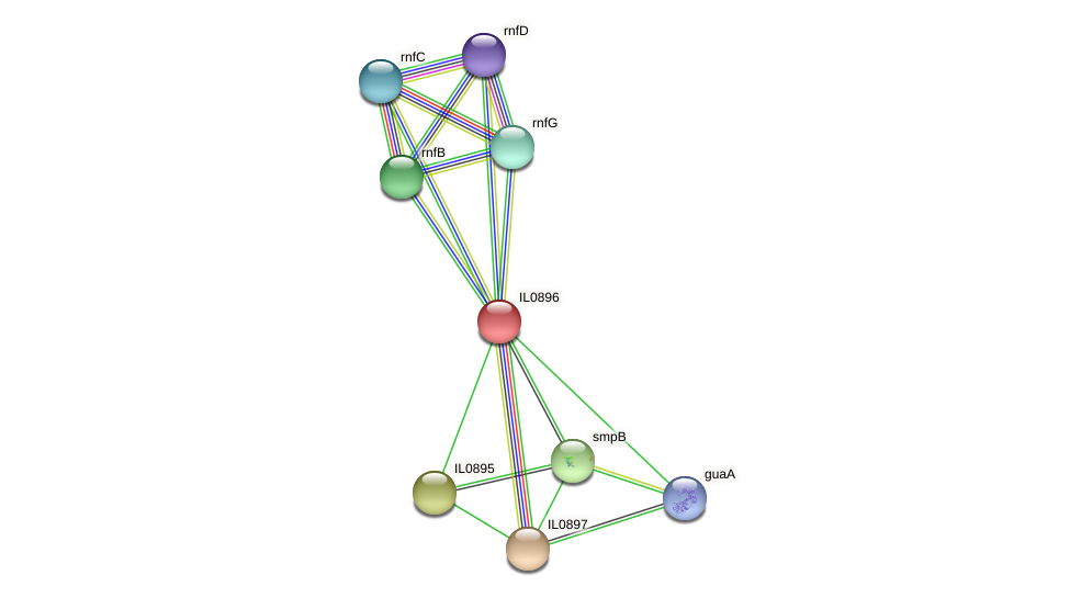 IL0896 protein (Idiomarina loihiensis) - STRING interaction network