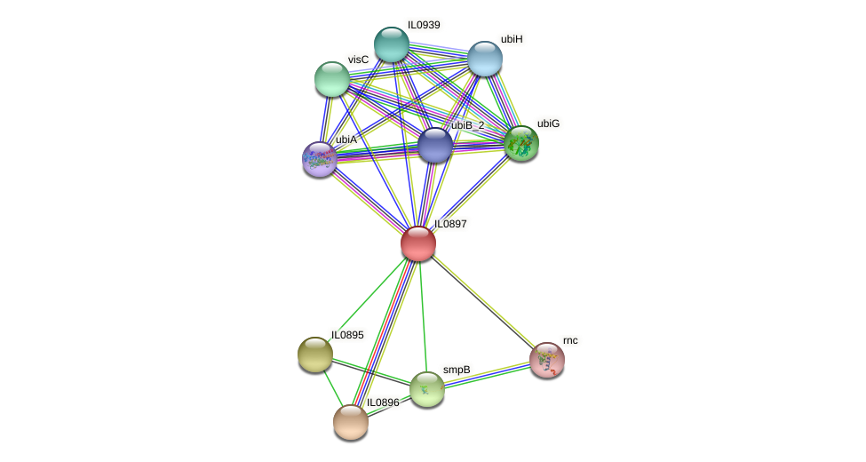 IL0897 protein (Idiomarina loihiensis) - STRING interaction network